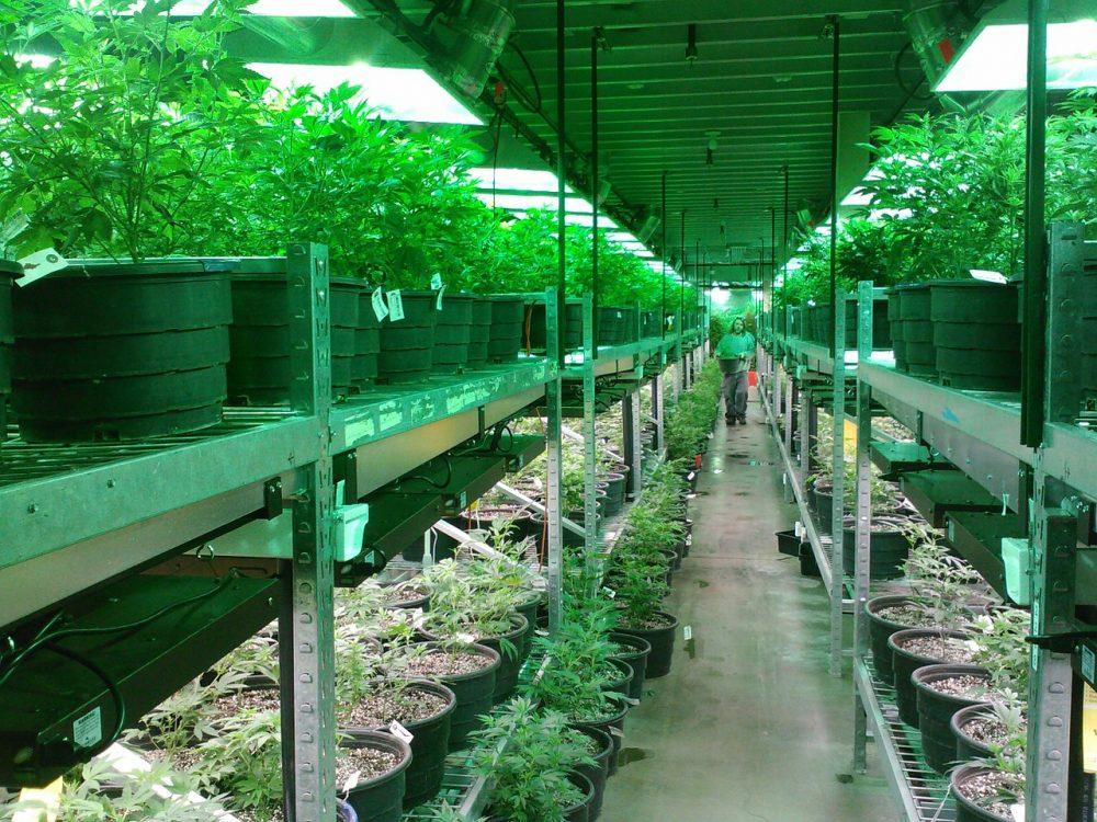Първи уроци от щатите, в които марихуаната е легализирана